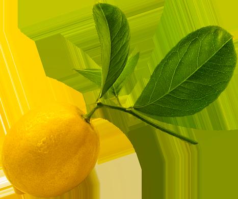 Image of a Meyer lemon from D. Geroge Benham's backyard!