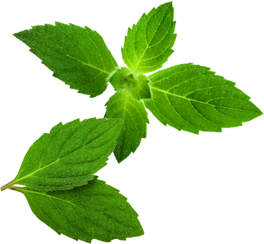 Mint PILFERED FROM A HIDDEN KWAKIUTL TEMPLE RUIN IN THE PACIFIC NORTHWEST