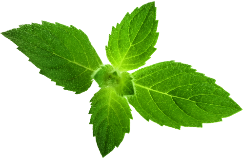 Peppermint leaves used to make Benham's Gin