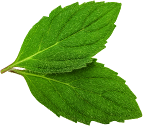 Peppermint with delicate sweetness, cooling menthol notes
