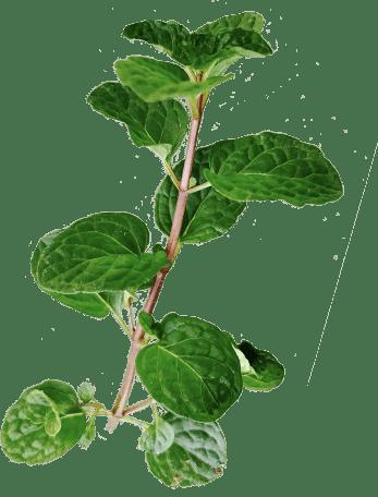 More mint