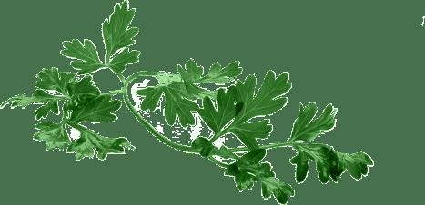 Green leaves that look like arugula