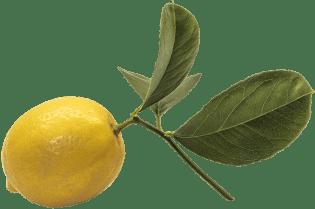 A Meyer lemon on a branch